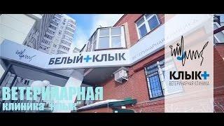 видео Ветеринарные клиники в Одессе