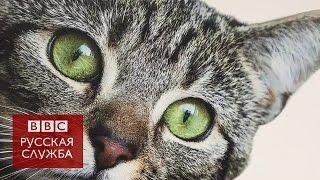 Кошки вместо рекламы в лондонском метро