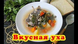 Уха из сома. Рецепт приготовления. Рыбный суп.
