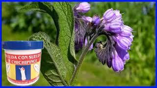 Suelda con Suelda Planta Medicinal