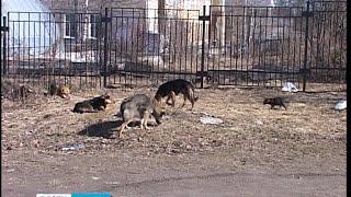 В Петрозаводске начался отлов бродячих собак