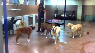 Tour our Cagefree Boarding and Dog Daycare Centre