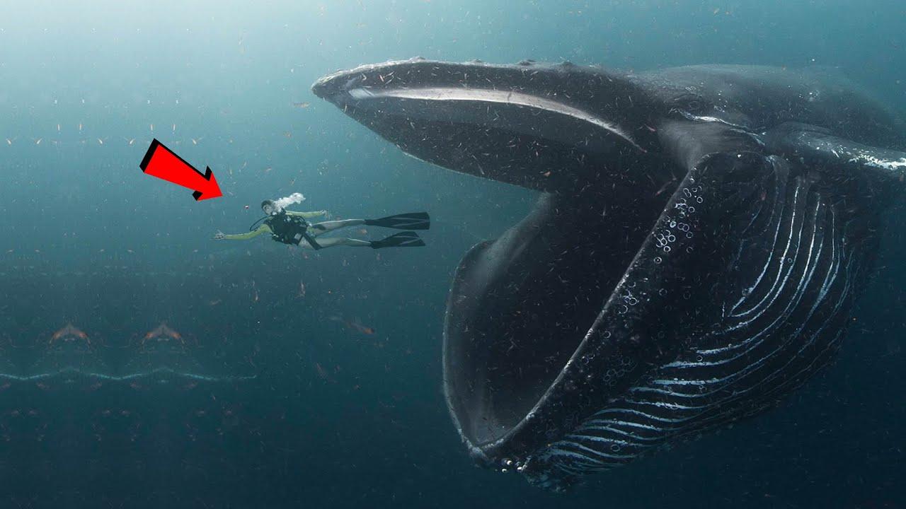 จะเกิดอะไรขึ้นหากคุณถูกวาฬ กลืนเข้าไป