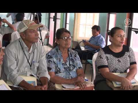 Proceso de actualización del Programa Forestal Nacional 2020-2030 en Nicaragua