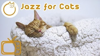 Jazz for Cats - Relaxing Rhythms for Cats and Kittens!