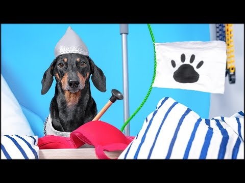 The Lord of the Remote! Cute & funny dachshund dog video!