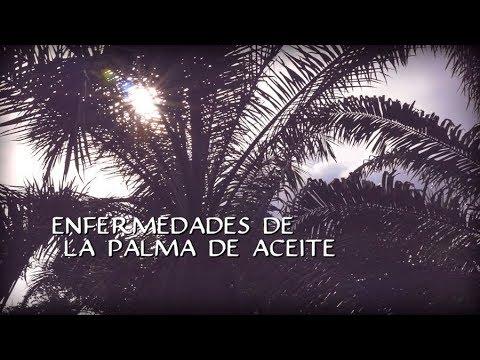 Enfermedades de la Palma de Aceite - TvAgro por Juan Gonzalo Angel