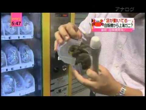 Live Crabs Sold In Chinese Vending Machines