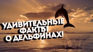 Дельфины - Удивительные и малоизвестные Факты!