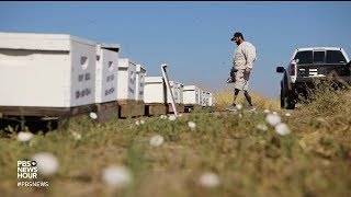 War veterans find sustenance--and solace--in farming