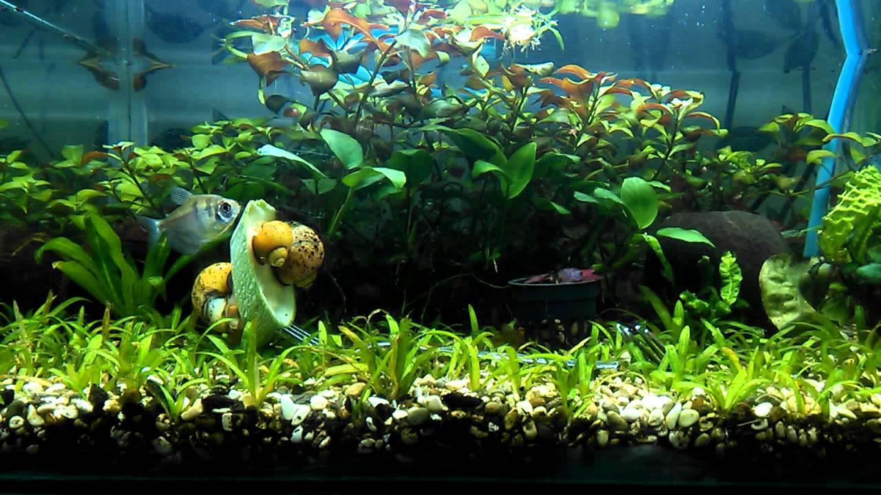 аквариумистика и рыбалка