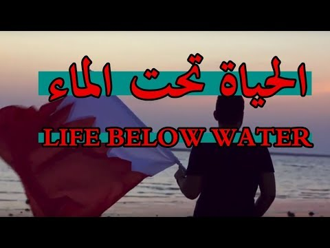 Life below water SDG Bahrain | الحياة تحت الماء