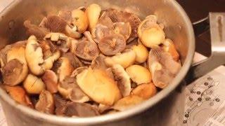 1 часть. Горячая засолка грибов. Ложноопёнок серопластинчатый.