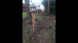Baby beagle freaking out around bird feeder
