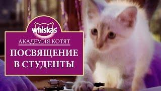 Эпизод 3. Котята играют. Посвящение в студенты. Академия котят
