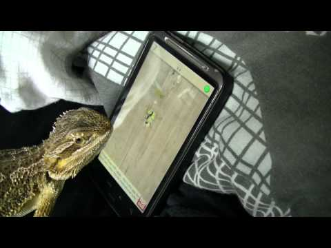 Bearded Dragon playing Ant Crusher