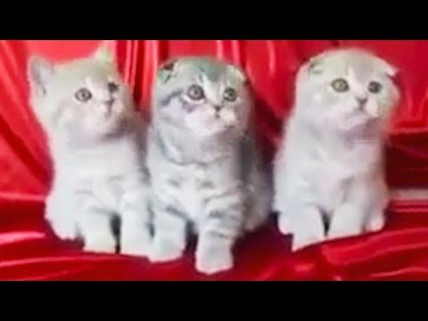 Funny Pets 🐇🐈🐕🐖 7 Minutes of Cuteness [Funny Pets]