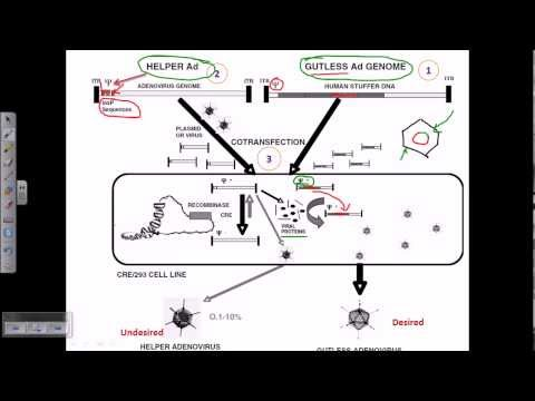 Gene therapy using adeno virus