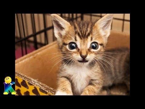 未熟児で産まれ、その生涯を終えようとしていた一匹の子猫。そんな子猫を救うため施設スタッフの全力の看護が今始まる。【猫にまつわる感動話】