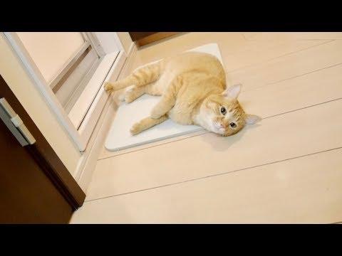 珪藻土マットにメロメロな猫