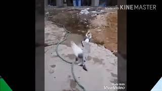 جديد حالات واتس اب حسان صيني خيرو..