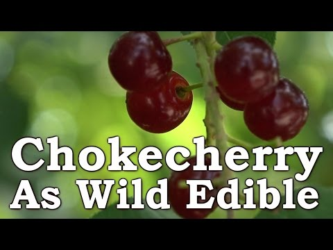 Wild Chokecherry - In Surival & Wilderness Living [Fruit Leather, Jam, Juice, Raw]