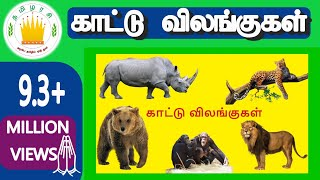 30 காட்டு விலங்குகள்|Learn 30 Tamil Wild animals name video for Kids and Children