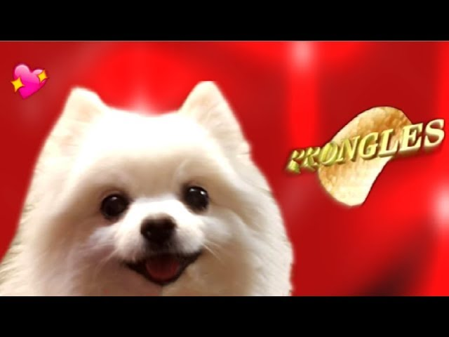 prongles-song