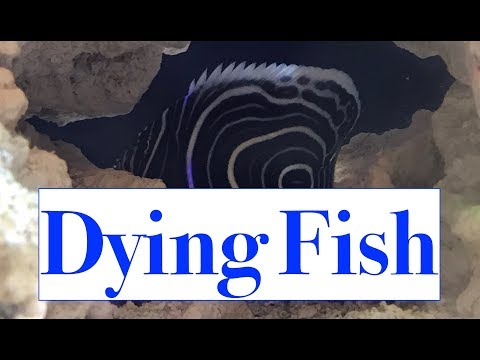 I BOUGHT A DYING FISH