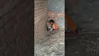 Dog, puppy, child fight...