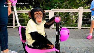Беби-бум 2018 в зоопарке «Планета обезьян и диких кошек» Отеля Yalta  Ntourist