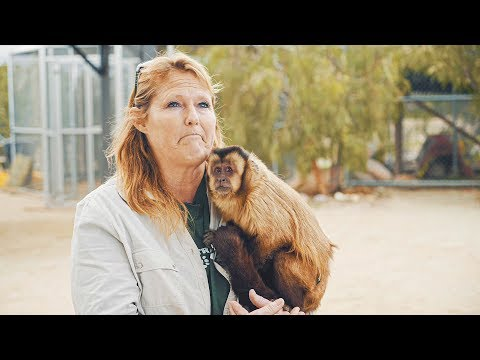 Abused For Views: Mistreated Exotic Pets Of Social Media  Tfil Films Documentary