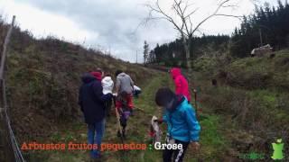 Reforestación en el monte Oiz con Sagarrak