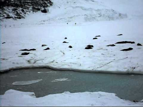 Seals and penguins at Scott Base Transition, Antarctica