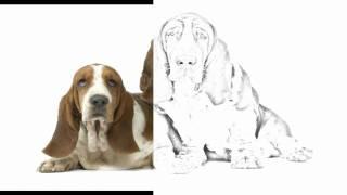 Auto Draw 2: Basset Hounds