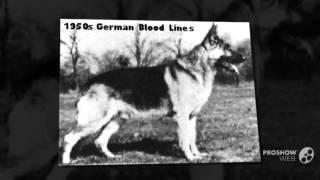 German Shepherd German Blood Lines- History