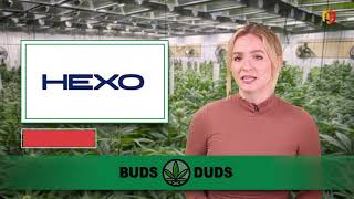Buds & Duds: Cannabis stocks struggle as analysts cautious on Canadian sector