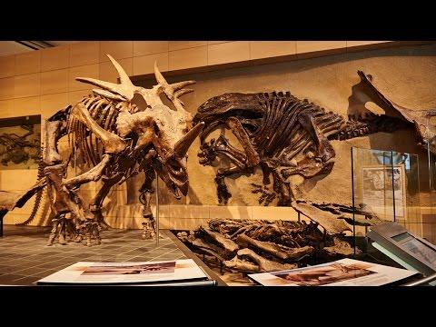 Musée canadien de la nature | Tourisme Ottawa
