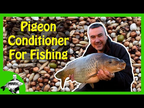 Preparing Pigeon Conditioner For Carp Fishing