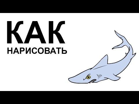 Картинки акулы. КАК НАРИСОВАТЬ АКУЛУ карандашом поэтапно