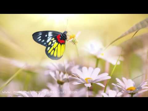 1 HOUR Mood Booster: Wellbeing Meditation Relaxing Music for Vibrational Healing