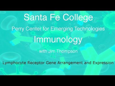 Santa Fe College: Immunology Lymphocyte Gene Organization and Expression