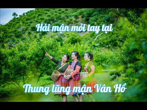 hqdefault - Khám phá thung lũng mận Vân Hồ - Vlog