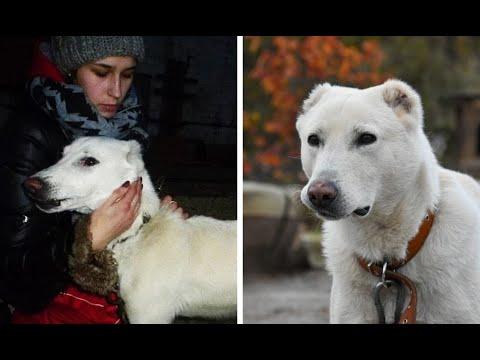 Женщина узнала, что бывший бросил их пса. Неравнодушные помогли им воссоединиться!