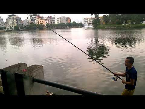 Câu cá mè ta bằng lưỡi ba tiêu siêu nhậy tại Hồ Tây Hà Nội #Fishings