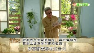 種子盆栽DIY教學 - 水泥花器