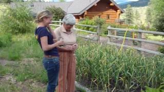 When to Harvest Garlic