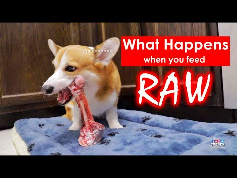 This Is What Happens When You Feed RAW BONES To Dogs!!!