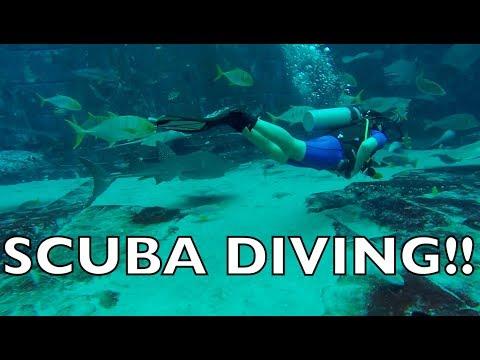 SCUBA DIVING IN DUBAI! (UNDERWATER FOOTAGE)