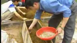 Hướng dẫn kỹ thuật trồng nấm rơm ngoài trời - 02